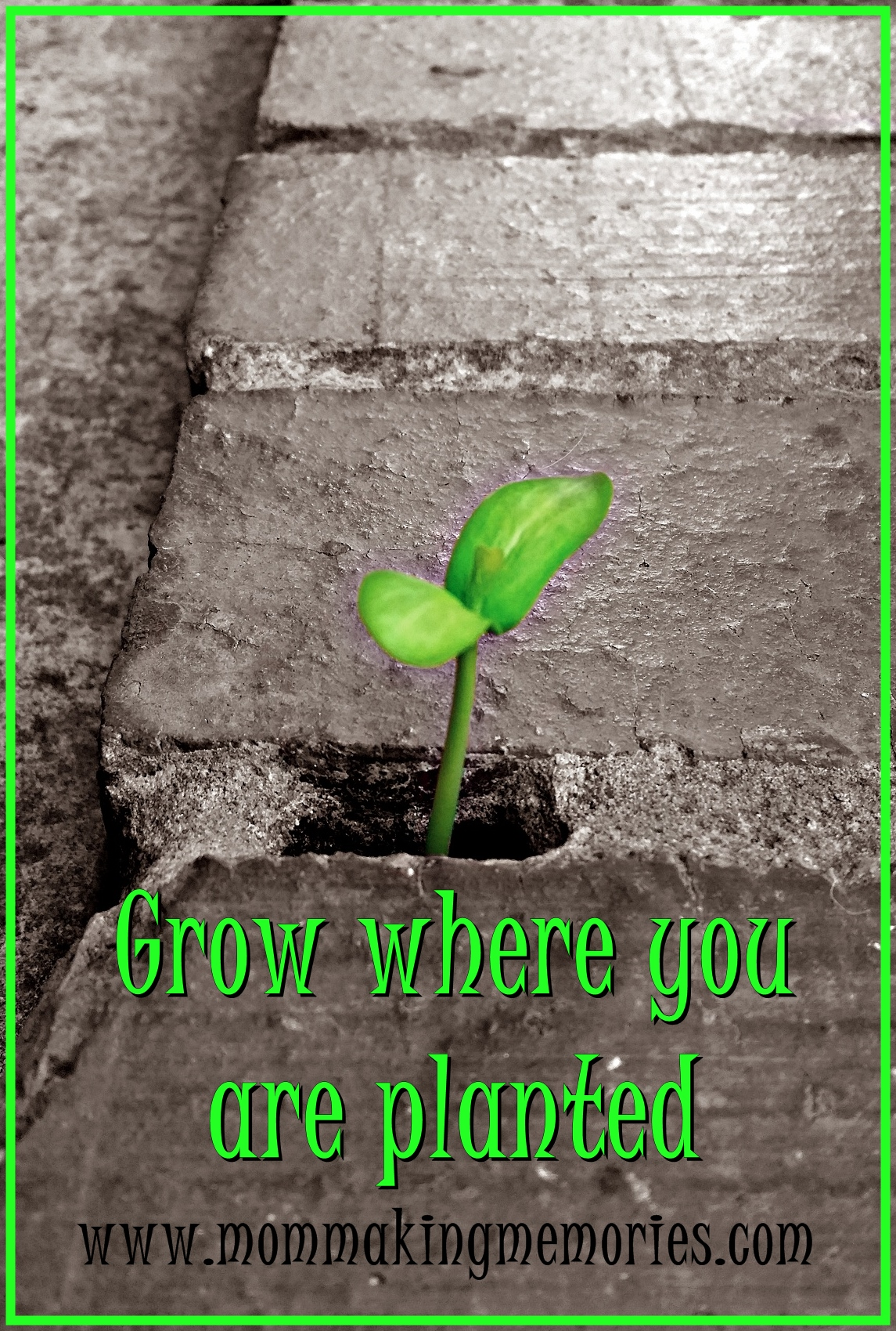 Grow where you are planted. www.mommakingmemories.com