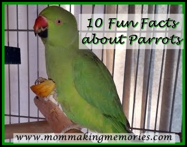 10 fun facts about parrots. www.mommakingmemories.com